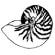 Seashell2